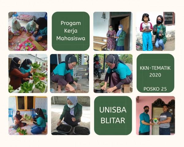 Ayu Rani memberikan sosialisasi bercocok tanam hidroponik kepada warga di Kelurahan Sutojayan