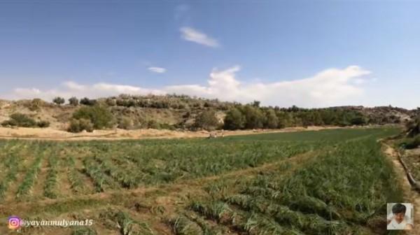 Jarang yang Tahu, Ada Pertanian Bawang di Bukit Tandus Saudi Arabia