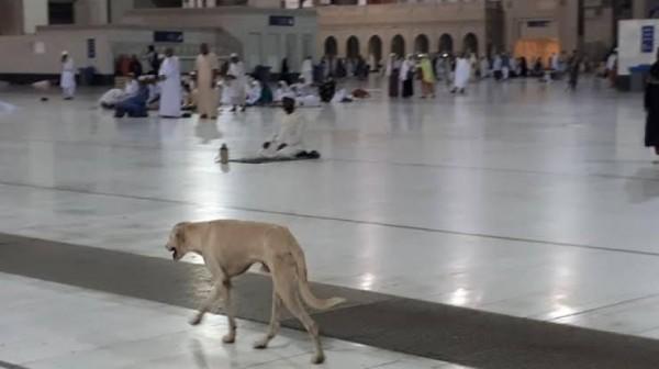 Meski Najis, Tanah Suci Makkah Juga Dipenuhi Anjing Liar