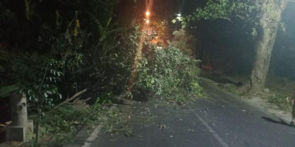 Pohon tumbangdi kawasan Jalan  Raya Pandanrejo, Desa Pandanrejo, Kecamatan Bumiaji. (Foto: istimewa)