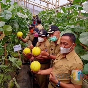 Panen Raya Melon di Sumberkembar, Bupati Rijanto Puji Produktivitas Petani Milenial