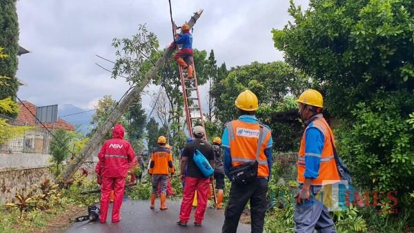 Petugas saat melakukan pembersihan pohon di Jalan Hasanudin, Dusun Beru, Desa Bumiaji Kecamatan Bumiaji, Sabtu (26/9/2020). (Foto: istimewa)