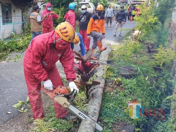 Petugas saat melakukan penebangan pohon tumbang di Jalan Hasanudin, Desa Bumiaji, Kecamatan Bumiaji.