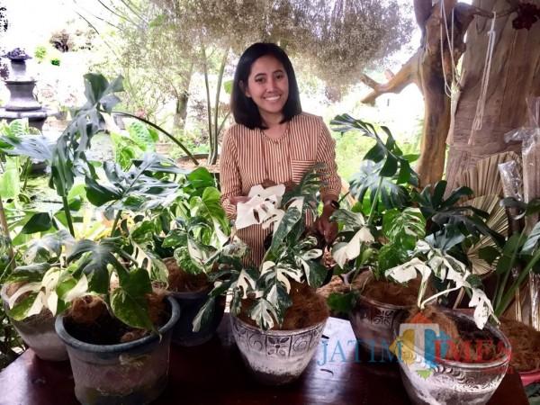 Pelaku usaha tanaman Kota BatuLily Indayani saat menunjukkan tanaman monstera di stannya di Kelurahan Temas, Kecamatan Batu. (Foto: Irsya Richa/MalangTIMES)