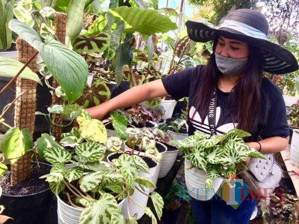 Pelaku Usaha Tanaman Kota Batu Vina Purwanti saat mengecek begonia di tokonya, Desa Sidomulyo, Kecamatan Batu. (Foto: Irsya Richa/MalangTIMES)