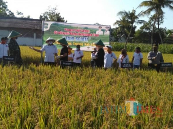 Padi Organik Majukan Pertanian Lumajang (Foto: Bramastyo Dhieka Anugerah / Jatim Times)