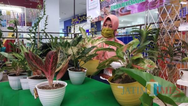 Belajar Merawat Tanaman, Datang Aja ke Pameran Tanaman Hias Terbesar di Malang Raya ini