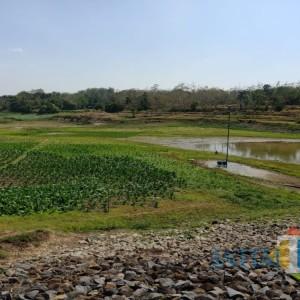 Warga di Jombang Manfaatkan Waduk yang Mengering untuk Bercocok Tanam