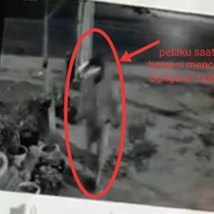 Maling Terekam CCTV Curi Bunga Sri Rejeki, yang Punya Bunga Wajib Waspada!