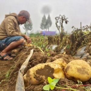 Gandeng UMKM dan Koperasi, Cara Petani Kota Batu Atasi Kerugian