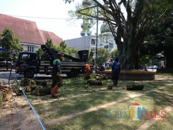 Tim perempesan pohon dari DLH Kota Malang (Hendra Saputra)