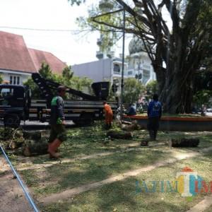 Lihat Kelayakan Pohon, DLH Kota Malang Miliki Tim Khusus