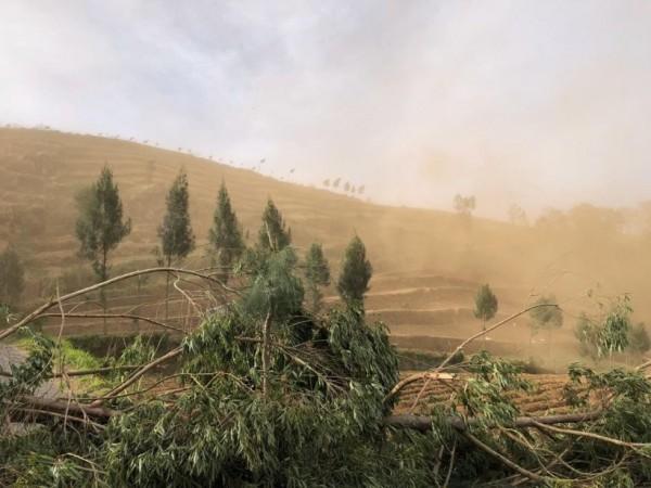 Efek La Nina: Badai Debu, Pohon Tumbang, hingga Banjir Rawan Terjadi di Kota Batu