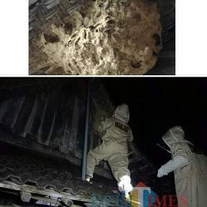 Tim SAR Kembali Operasi Pemusnahan Sarang Tawon Ndas