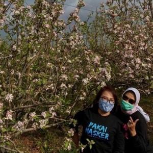 Wali Kota Batu Ajak Wisatawan Nikmati Keindahan Bunga Apel