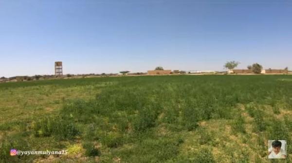 Kondisi Faktual Arab Saudi Sekarang, Padang Pasir Jadi Padang Rumput
