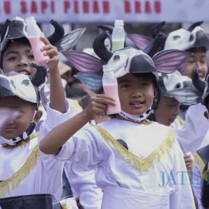 Sapi Lebihi Jumlah Warga, Wisata Edukasi Susu Sapi Perah Di-launching di Brau