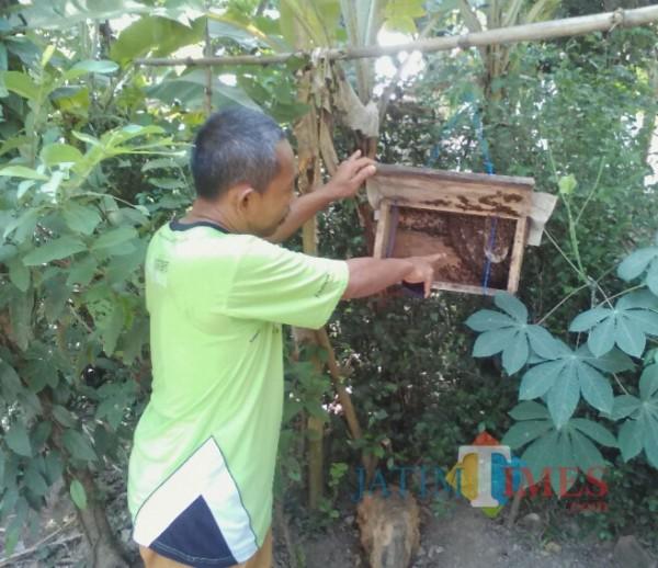 Edi Suryanto menunjukkan koloni lebah yang dibudidaya di samping rumahnya (Nurhadi Banyuwangi/ JatimTIMES)