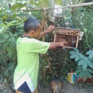 Budi Daya Lebah Usaha yang Menjanjikan dengan Modal Murah