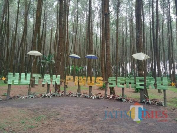 Destinasi wisata Hutan Pinus Semeru yang berada di Desa Sumberputih, Kecamatan Wajak, Kabupaten Malang. (Foto: Dok. JatimTimes)