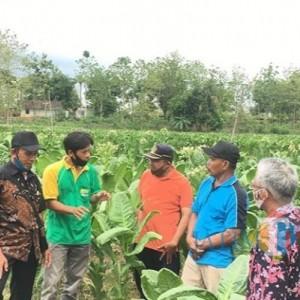 Dispertapa Pemkab Blitar Studi Banding Tembakau ke Rembang, Ini yang Dipelajari