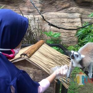 """Anak-Anak di Batu Secret Zoo Ramai-Ramai Beri """"Hadiah"""" ke Lemur"""