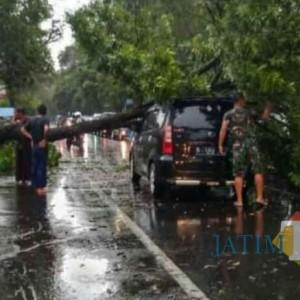 Angin Kencang di Lumajang, Satu Mobil Tertimpa Pohon Tumbang