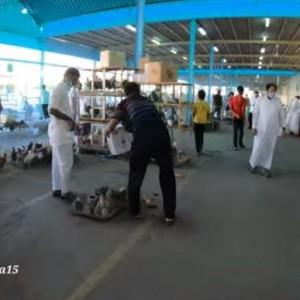 Melihat Suasana Pasar Burung di Makkah, Wanita Dilarang Masuk