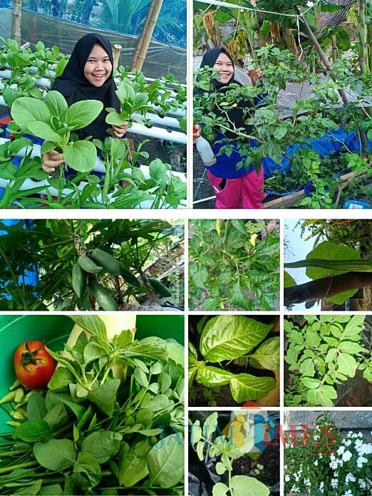 Abella Citra Prayudisetyo, Gadis Manis Asal Ngawi yang Gemar Kampanyekan Pertanian Organik