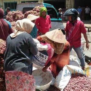 Harga Bawang Merah Terancam Turun, Disperindag Probolinggo: Harga Masih Stabil