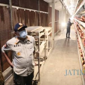 Tinjau Peternakan Ayam dan Itik, Pjs Bupati: Potensi Blitar Sangat Luar Biasa