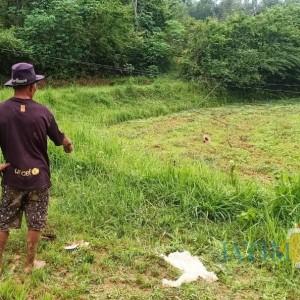 Kabel Keleleran Setrum Petani hingga Tewas, Aktivis BPB Desak PLN Pasang Tiang