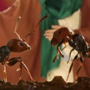 Al-Qur'an Sebut Semut Bisa Berbicara, Begini Hasil Penelitian Para Ilmuwan