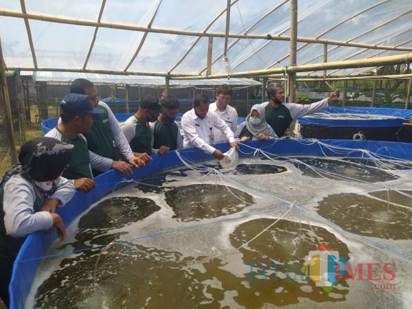 Ditandai Tebar Benih, Budidaya Udang Vaname di Kabupaten Blitar Perkokoh Ekonomi Nelayan