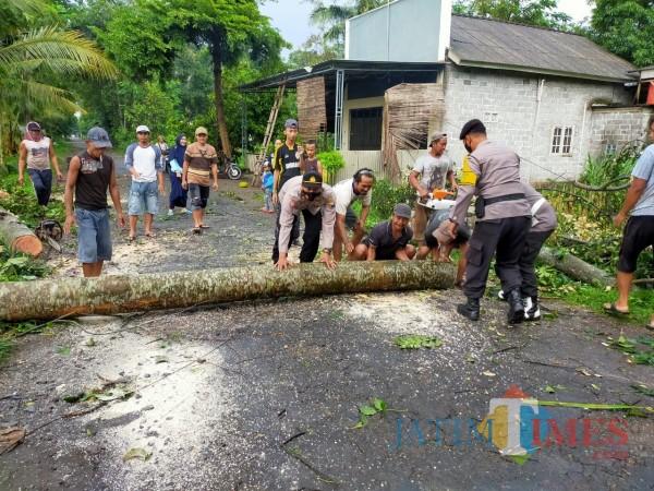 Polisi dan warga mengevakuasi pohon tumbang akibat bencana puting beliung