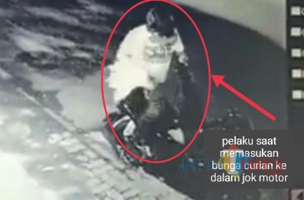 Pria Bersarung Kendarai Motor PCX Terekam CCTV Curi Dua Tanaman Hias