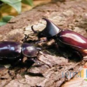 """Butuh """"Tukang Obat"""", Lonte di Tulungagung Serang Pohon Kelapa Bertahun-tahun"""