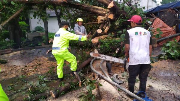 Polisi dan petugas PMI saat kerja bakti membersihkan pohon tumbang (istimewa)