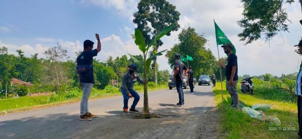 5 Tahun Jalan di Kencong Dibiarkan Rusak, Tumbuh Pohon Pisang di Aspal