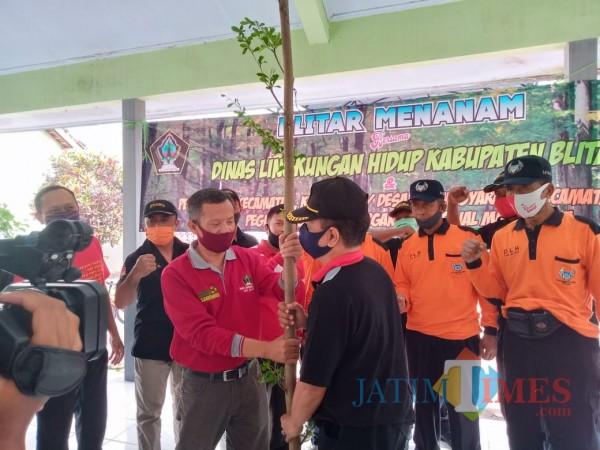 Hijaukan Kota Wlingi, DLH Pemkab Blitar Tanam 100 Pohon Peneduh
