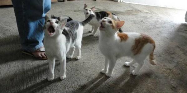 Ketika Kucing Mendekat Meminta Makanan, Ini Pesan yang Ingin Disampaikan
