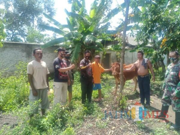 Sapi jenis Limousin yag berhasil ditemukan (Foto : Polsek Pasirian / Jatim TIMES)