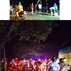 Hujan Deras Disertai Angin Kencang, Banyak Pohon Tumbang di Jalan Raya Ngawi-Madiun