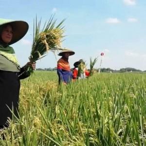 Dispertapa Kabupaten Blitar Dorong Seluruh Petani Gabung Poktan