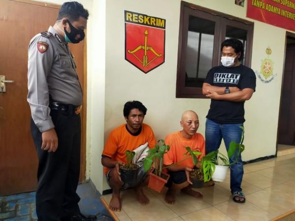 Kedua tersangka pencuri tanaman hias saat diamankan di Mapolsek Karangploso. (Foto: Polsek Karangploso)