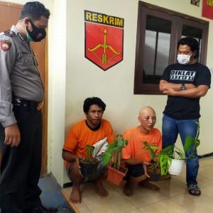 Tren Tanaman Hias Meningkat, Dua Pria di Karangploso Nekat Curi 250 Tanaman Hias