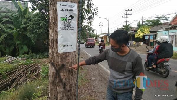 Ichkwan saat tunjukan pohon sonokeling yang batal ditebang, terlihat tanda silang hitam, penanda pohon yang hendak ditebang (Joko Pramono for Jatim TIMES)