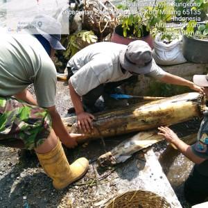 Normalisasi Saluran di Kedungkandang, Satgas Temukan Pohon Pisang Sumbat Aliran Air