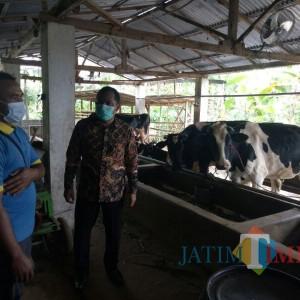 Menelisik Produksi Susu di KUD Tani Makmur Bersama Ketua DPRD Lumajang