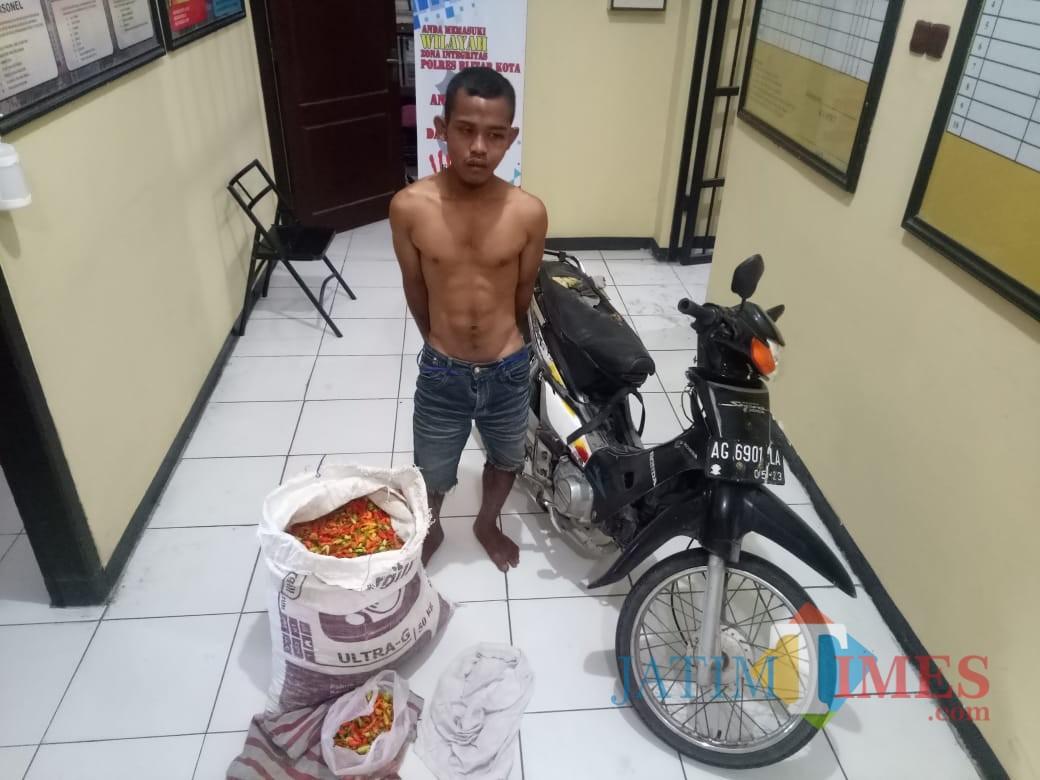 Cari Tahu, Nekat Nyolong Sekarung Cabai, Pemuda Nglegok Diamankan Polisi